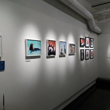 写真展見に行きました「女性の写真教室 修了展vol.20」 – 大阪ソラリス